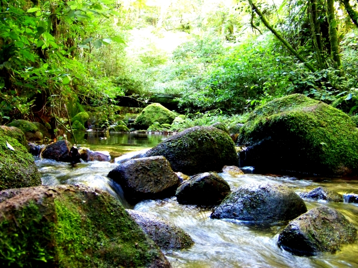 Pequeno riacho