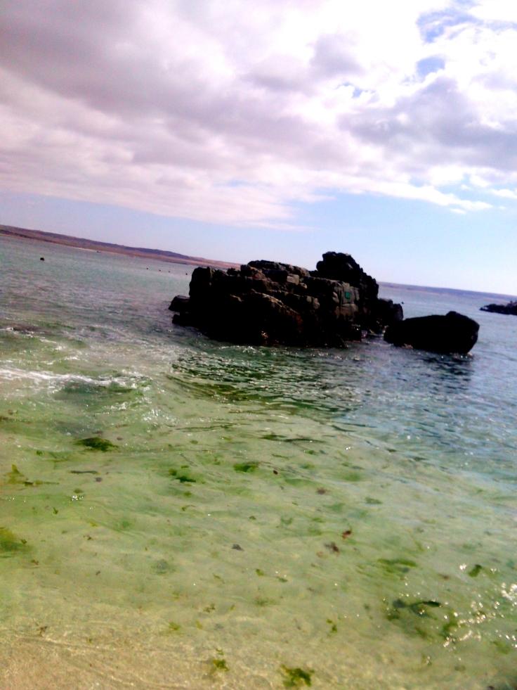 Alga na água