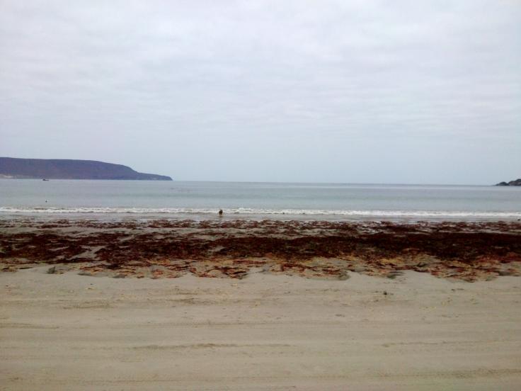 Algas que ficam na beira do mar